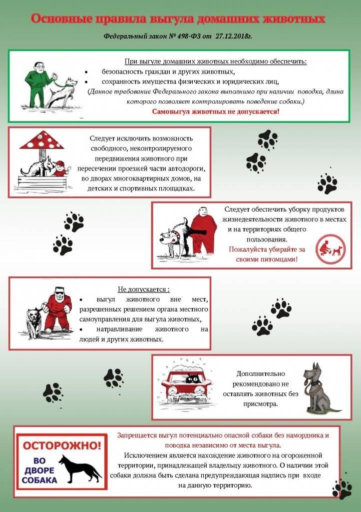 Выгул собак на придомовой территории: что говорит закон о том, каковы штрафы за прогулку там, где она запрещена?