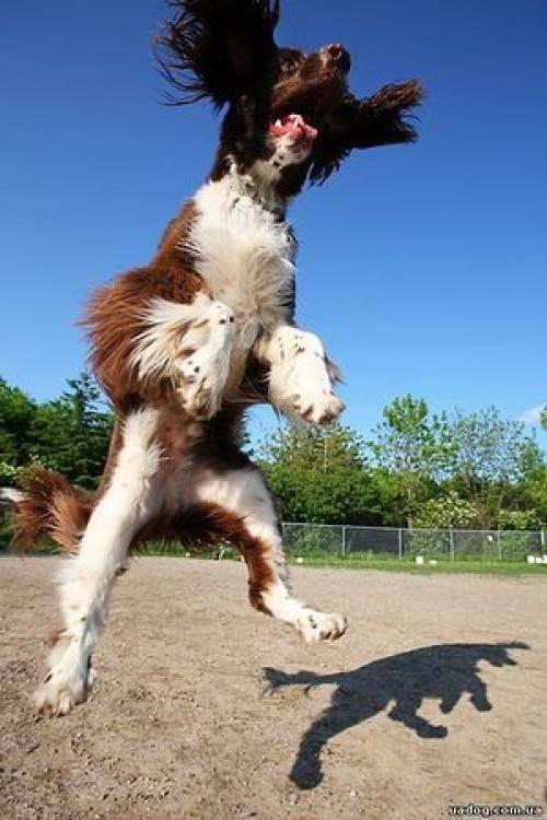 Как отучить собаку прыгать на хозяина и других людей