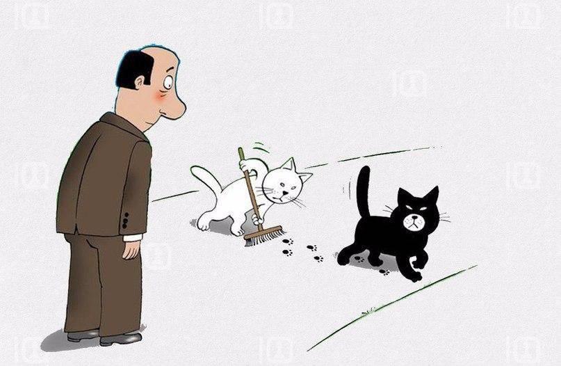 Приметы о черной кошке и суеверия: к чему пришла в дом, хорошо это или плохо, когда приблудилась и прибилась, почему забежала, что приносит, если завести?