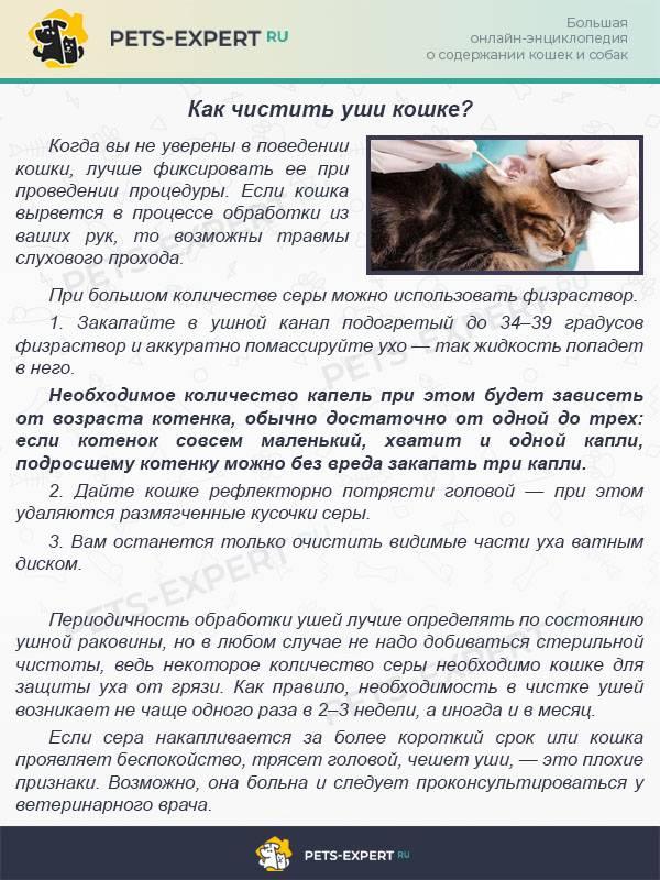Как почистить уши кошке в домашних условиях: советы и инструкция