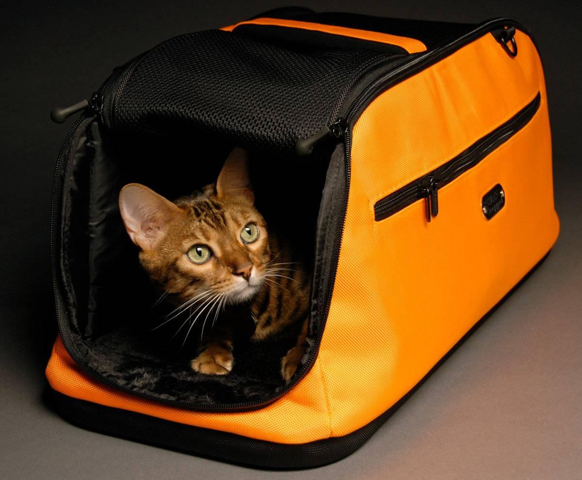 Как перевозить кошку в машине? основные правила для безопасной поездки