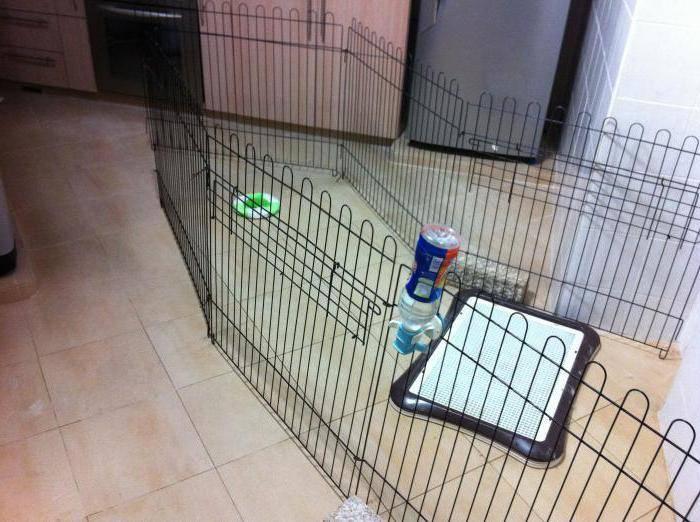 Пошаговая инструкция по приучению щенков к туалету в квартирных условиях