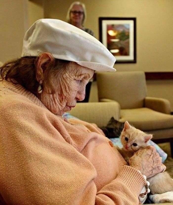 Как правильно ухаживать за старой кошкой?