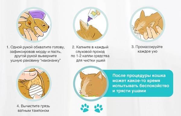 Кот чихает: причины, что делать в домашних условиях