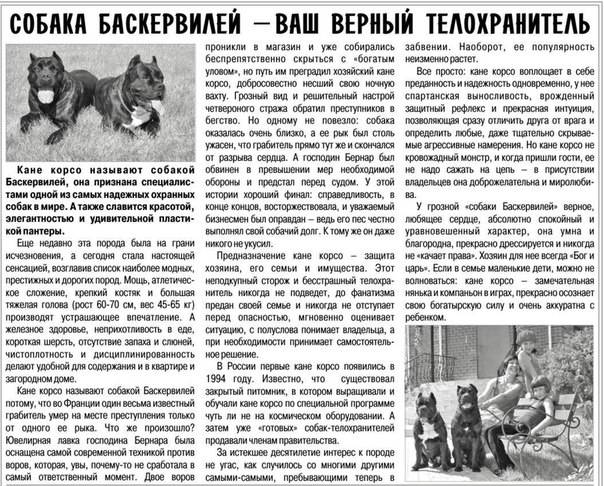Психология, вредные привычки, воспитания и дрессировка собак породы кане-корсо
