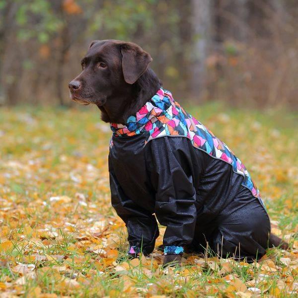 25 популярных собак средних размеров | hidogs.ru
