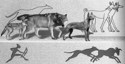Как происходило одомашнивание собак