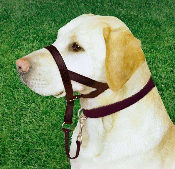 Как сделать халти для собак своими руками