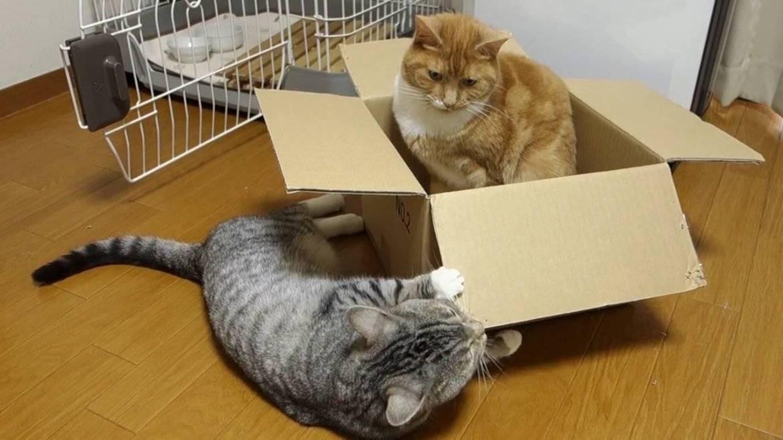 Почему кошки любят коробки и пакеты, почему нравятся почему кошки любят коробки и пакеты, почему нравятся