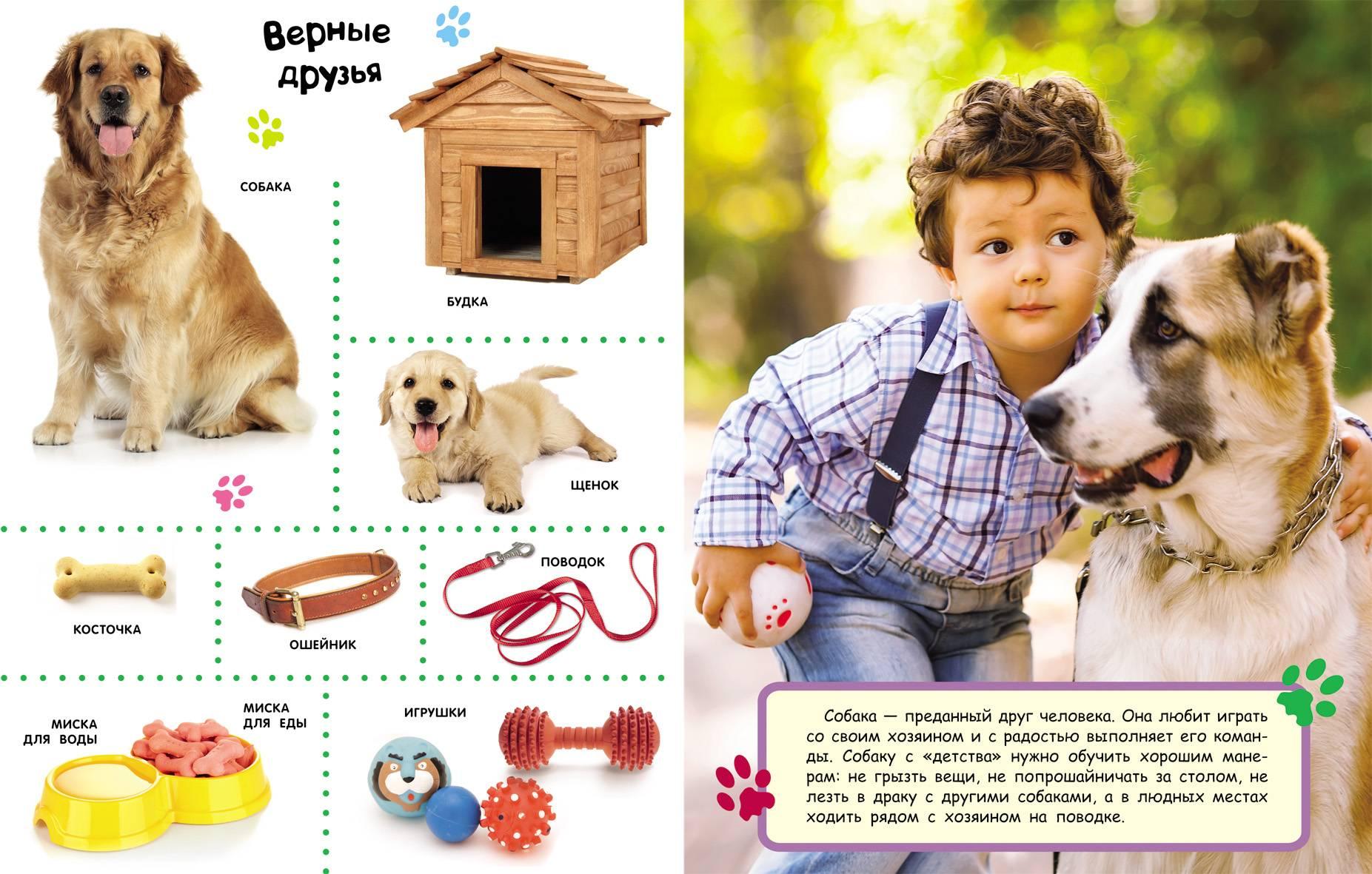 Первые дни щенка в новом доме. как обустроить место для щенка и приучить его к дому? игрушки для питомца