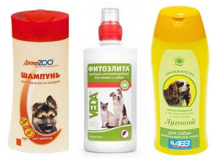 Как часто можно мыть собаку дома