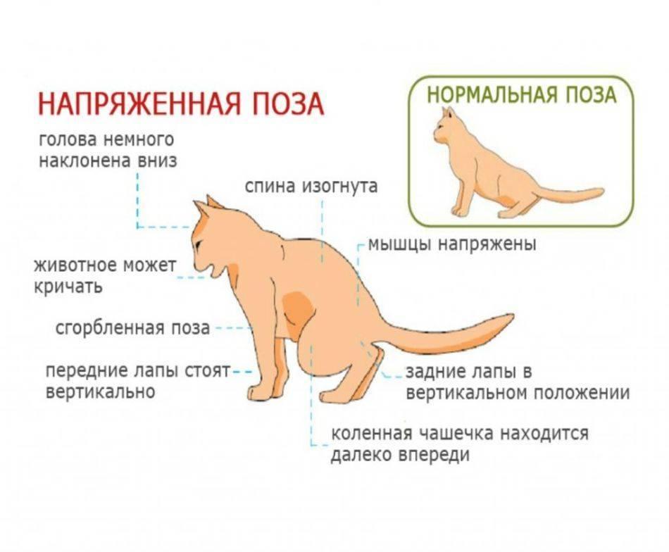 Болезни желудка у кошек: симптомы, лечение, фото и видео