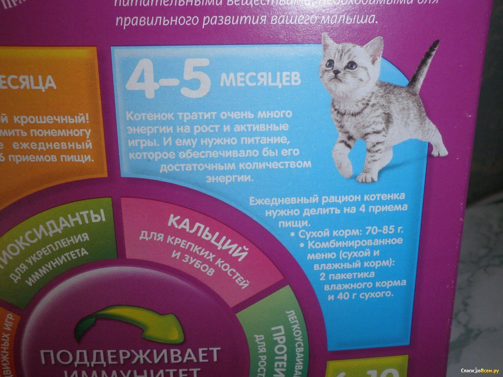 Сколько раз в день нужно кормить котенка по месяцам?