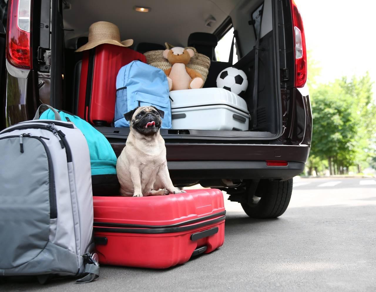 Стоит ли брать собаку в отпуск: плюсы и минусы