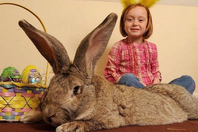 Методы, как называть девочку-кролика, если та декоративная