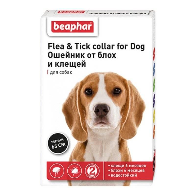 Хорошая защита вашего питомца! обзор ошейников от блох и клещей для собак