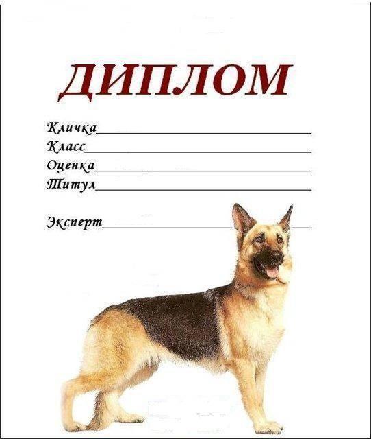 Самые подходящие имена для щенков немецкой овчарки