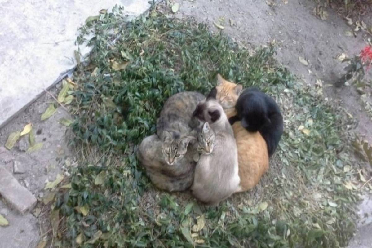 Отравление кошки крысиным ядом - симптомы и первая помощь! | caticat.ru