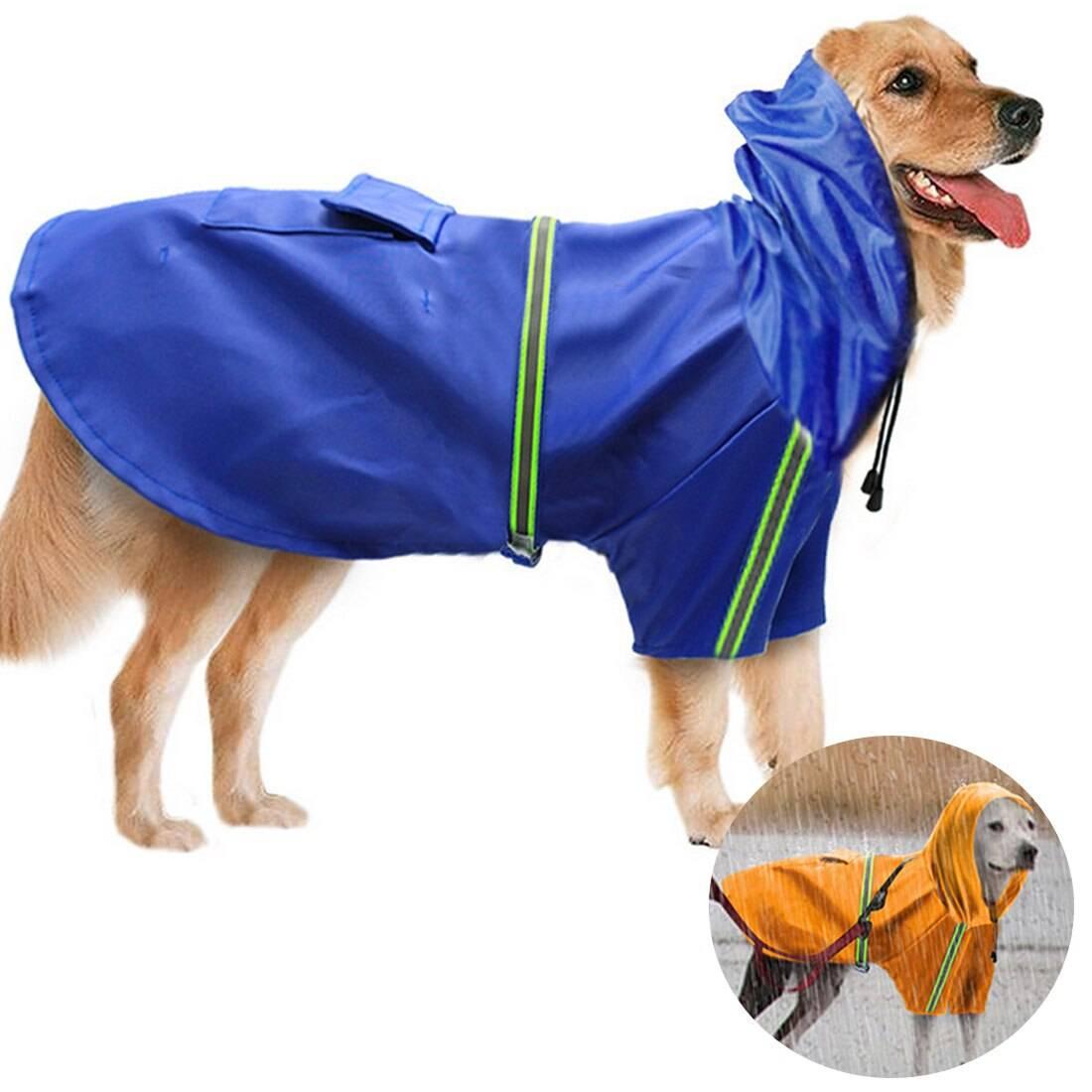 Редкие породы собак с фотографиями и названиями | petguru