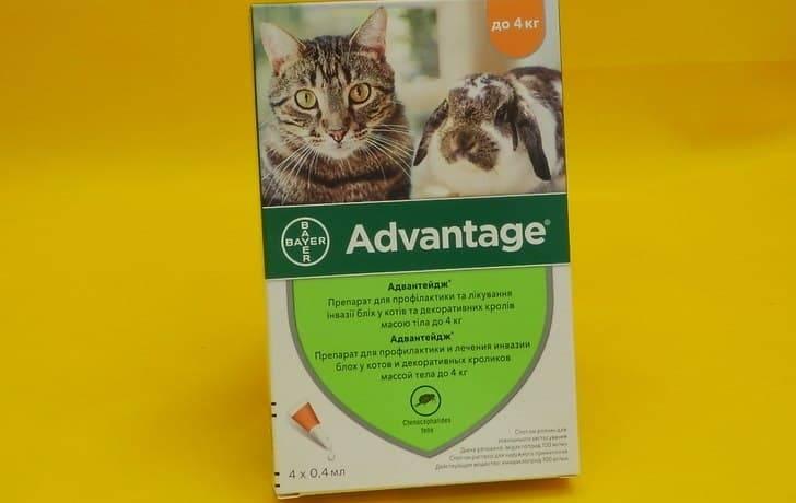 Адвантейдж для кошек — капли от блох и вшей
