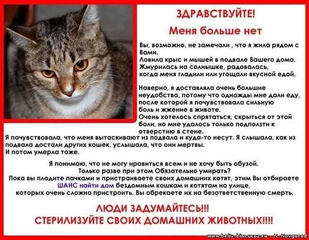 Советы ветеринара: как оставить кошку одну дома на несколько дней без вреда здоровью