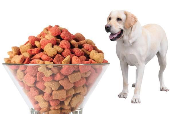 Особенности кормления взрослого и щенка лабрадора: сухое и натуральное питание