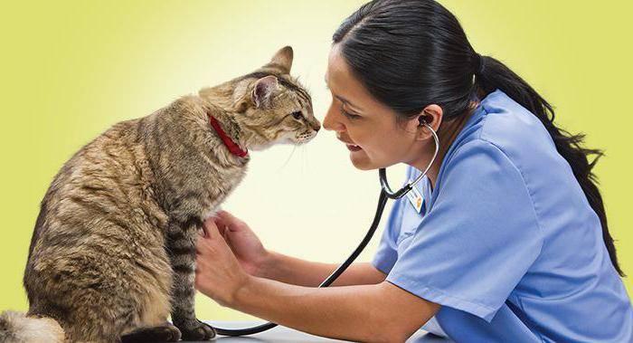 Вирус иммунодефицита у кошек симптомы и лечение