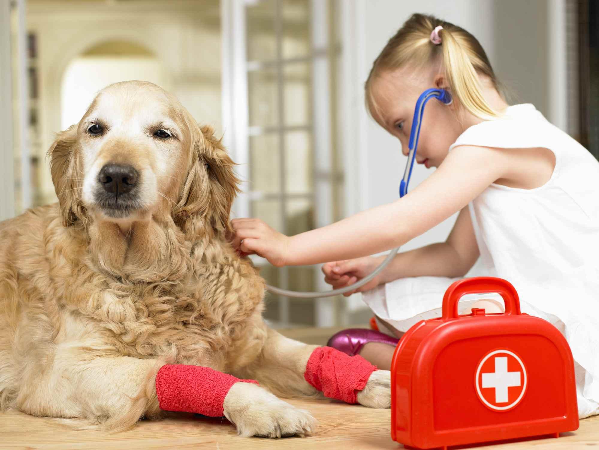 Часть 5. уход за собакой и ее воспитаниешкола прикладной этологии