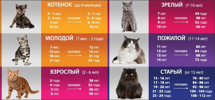 Сколько кошке лет по человеческим меркам?