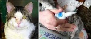 Чем промывать глаза котенку?