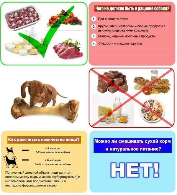 Сколько варить легкое говяжье и как его использовать?