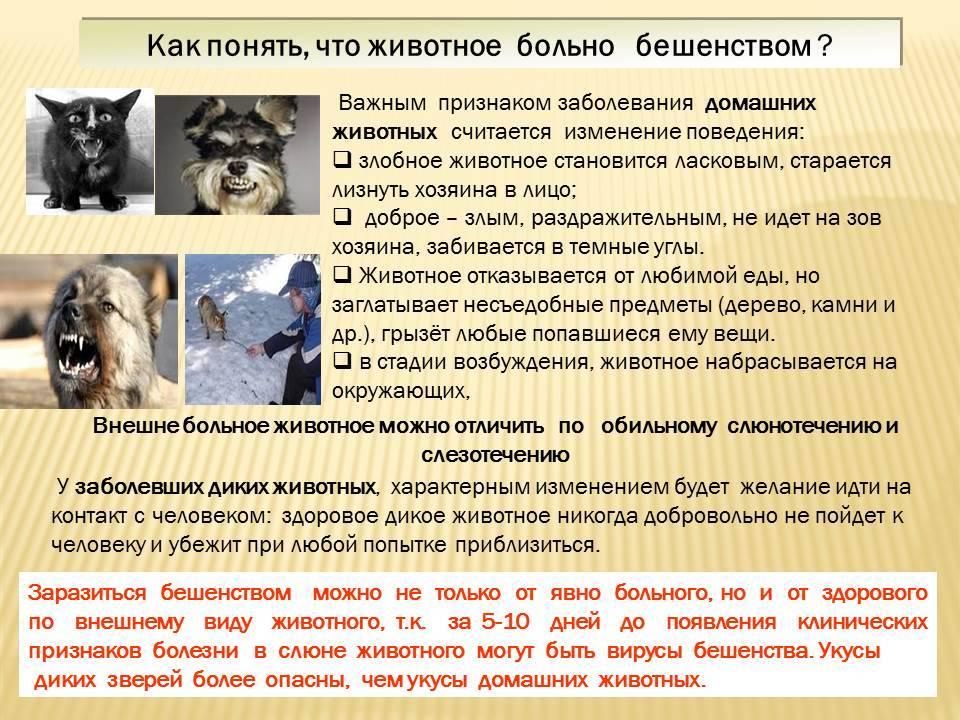 Бешенство у кошек и котов