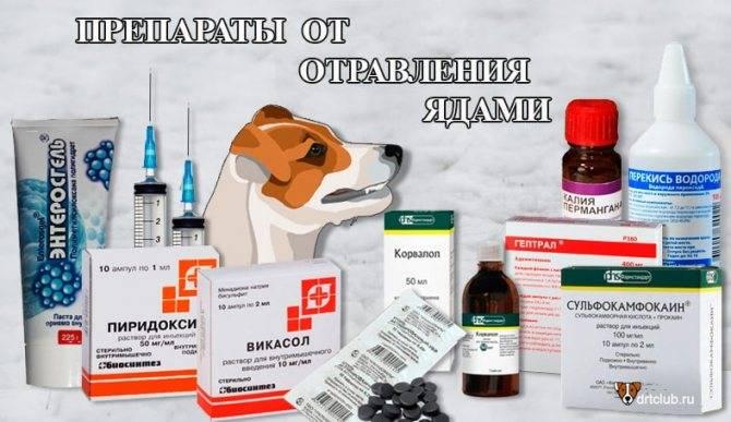 Интоксикация у собак