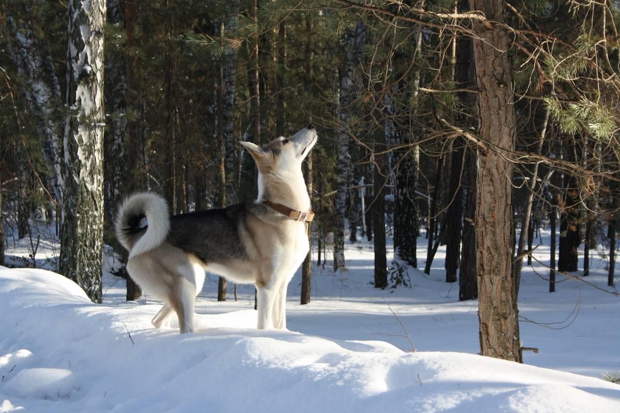 Топ-35 самых добрых пород собак в мире ? с описаниями, фото, видео и ценами   petguru