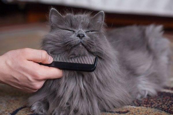 Как избавить кошку от колтунов - oozoo.ru