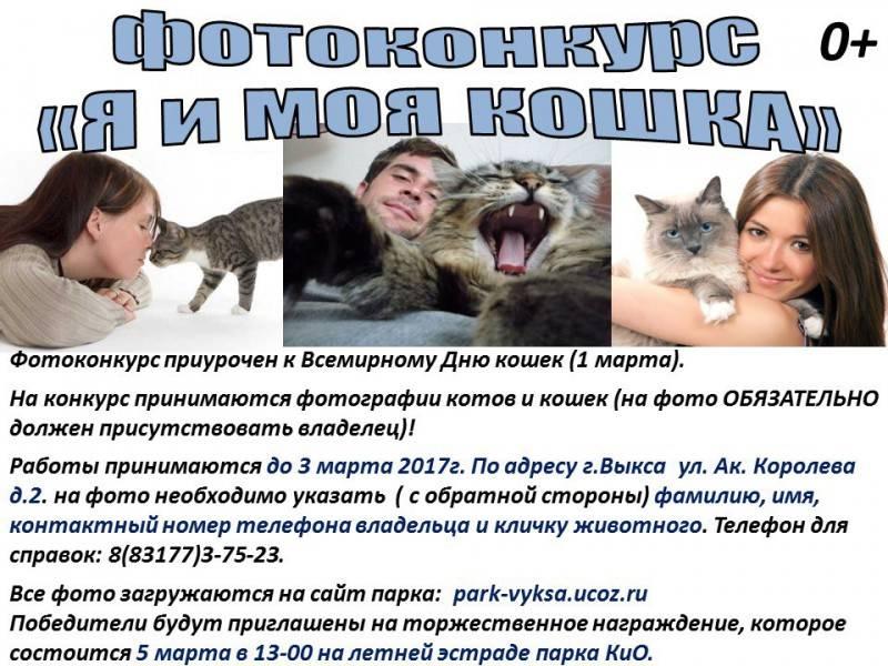 Всемирный день кошек в 2021 году: какого числа, дата и история праздника
