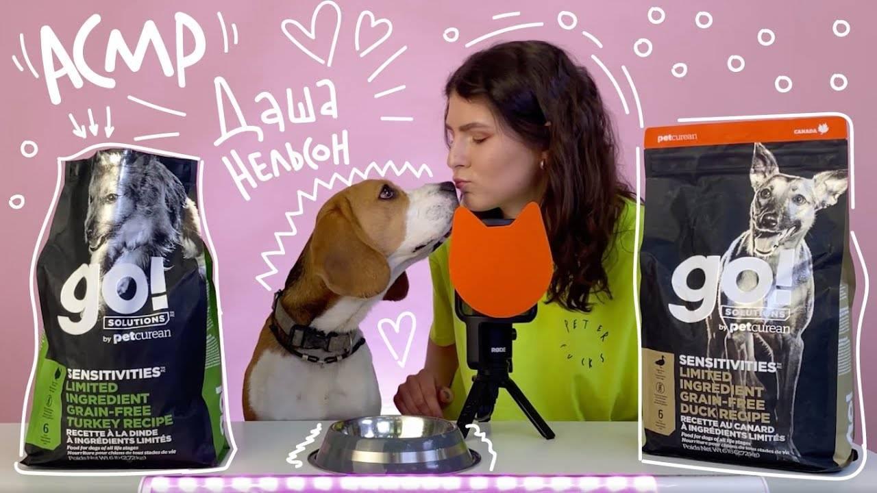 Можно ли давать собаке сухой корм?