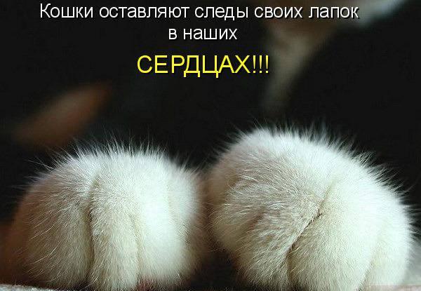 Почему кошка топчет вас лапками и урчит: все секреты раскрыты!