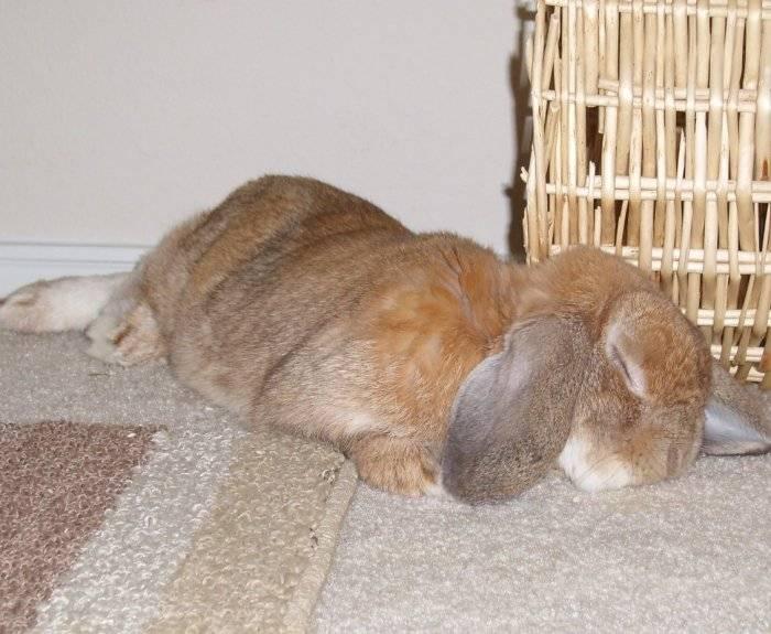 Почему болеют и дохнут кролики: симптомы, причины, что делать?