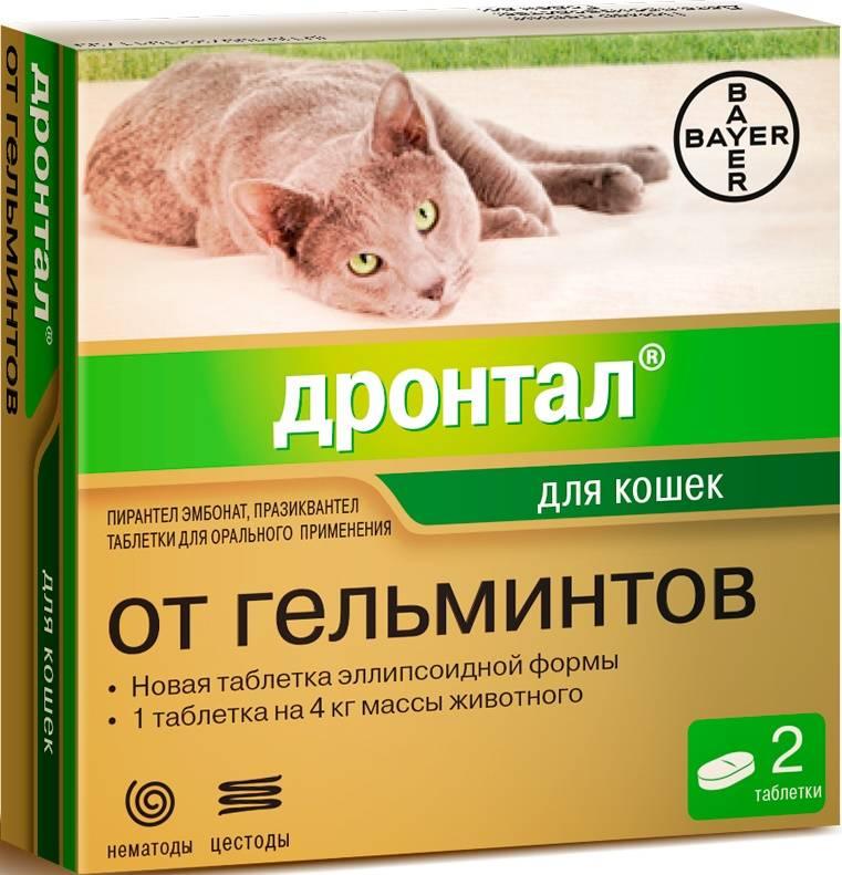 Дронтал для кошек: описание и особенности применения