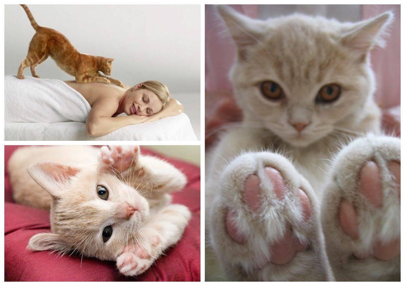 Почему кошки топчут нас лапками и мурчат: топчут одеяло