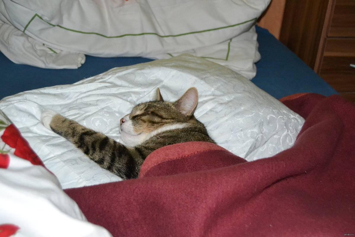 Почему кошка ложится на человека и любит спать на животе или груди
