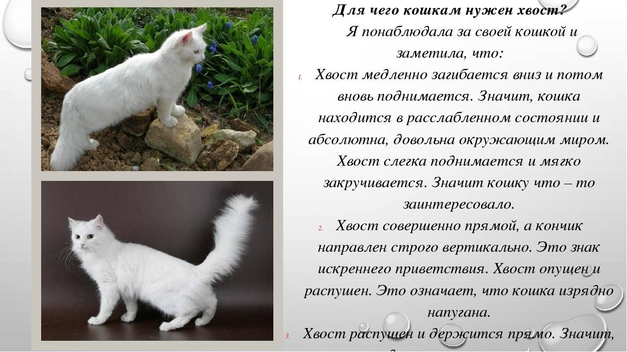 Почему кот дергает хвостом и спиной?