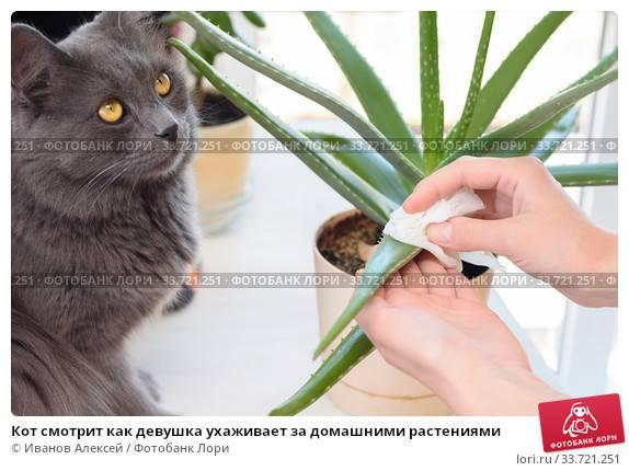 """Как защитить рассаду от кошек – прекращаем """"войну"""" и спасаем будущий урожай"""