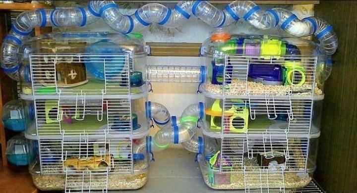 Клетки для джунгарских хомяков: какие должны быть, как обустроить, где разместить, как часто чистить