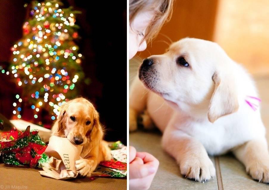 Список пород собак-компаньонов: лучшие охранники, сторожа и няньки для ребенка