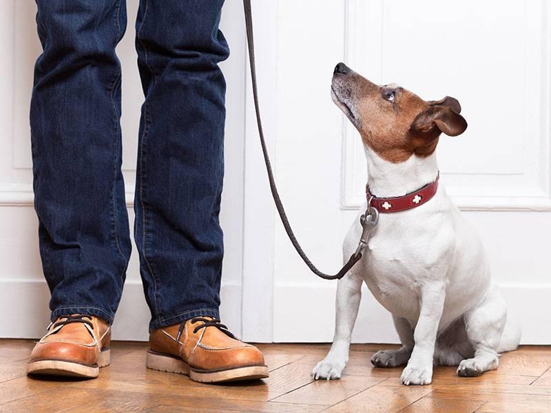 Узнаем как приучить собаку к поводку и ошейнику — советы для любого возраста ⋆ собакапедия