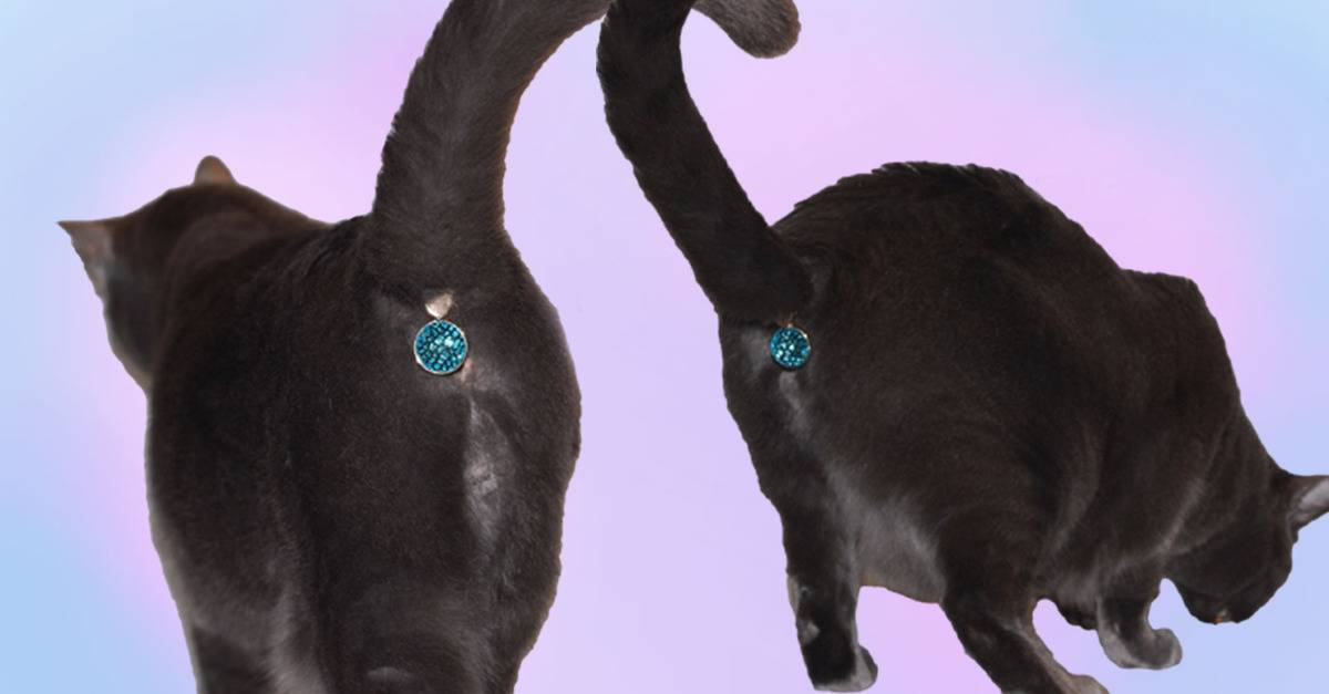 Почему и зачем кошки лапами мнут человека, как будто делают массаж, что это значит?