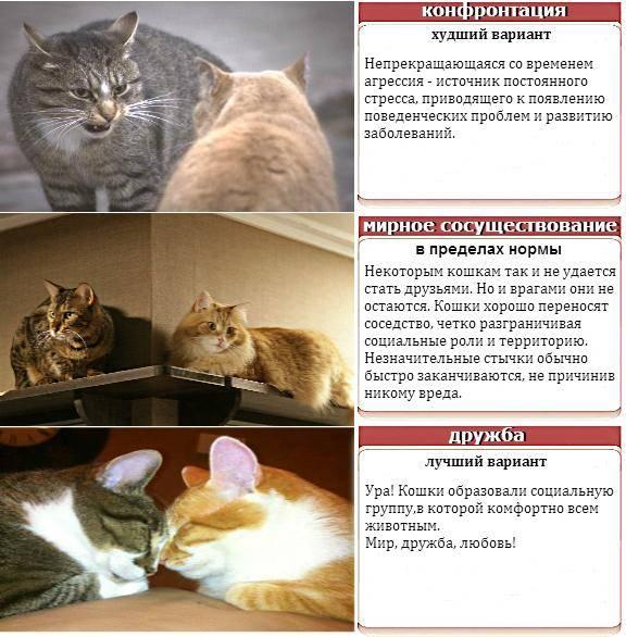 Психология кошек. люди, которые любят кошек