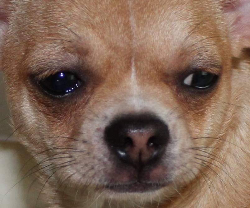 Могут ли собаки плакать и все причины их слез
